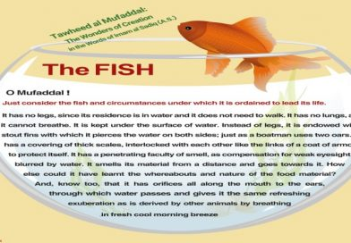 Tawheed al Mufaddal: The FISH in the Words of Imam al Sadiq (A.S.)